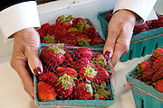 Woman holding strawberries at Orange Blossom Groves produce shop.  Seminole Tampa Bay Area Florida USA