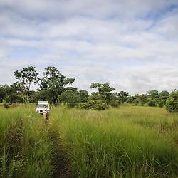 Anhara na Floresta Miombo no Parque Nacional da Cangandala na província de Malange. Projecto de preservação da Palanca Negra Gigante (Hippotragus niger variani) iniciado e mantido pelo Dr. Pedro Vaz Pinto. Angola