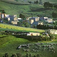 Poggioreale, Sicily 1999, 2019