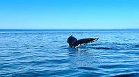 Tadoussac has a long reputation of offering whale-watching cruises as well as numerous cruises in the Saguenay fjord. It is in fact one of the first places where tourists boarded boats to go whale-watching.