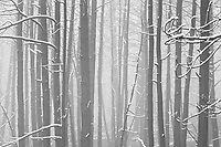 A dusting of snow decorates a recently burned forest near Boulder, Colorado.