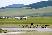 At the river side, , white lake, Tsagaan nuur, Mongolia