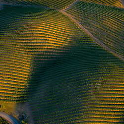 Aerial view of Wine Vineyards in the shape of a pregnant woman. Aerial views of artistic patterns in the earth.