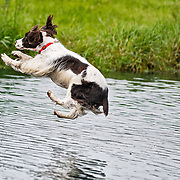 2020 WESSA Hunt Test | A,B Field Water Sun 9/5/2020