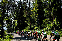 Peloton near Medvode during 3rd Stage of 26th Tour of Slovenia 2019 cycling race between Zalec and Idrija (169,8 km), on June 21, 2019 in Slovenia. Photo by Vid Ponikvar / Sportida