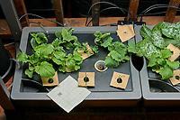 AeroGarden Farm 05 Left Tray Day 14. L01-L03 Cucumber (Burpee); L04-L06 Kale (Burpee); L07-09 Broccoli Raab (Burpee); L10-L12 (Bunching Onions (Botanical Interest). Image taken with a Leica TL-2 camera and 35 mm f/1.4 lens (ISO 500, 35 mm, f/8, 1/80 sec).