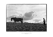 Ploughing at Stoneyford, Kilkenny.<br /> <br /> 5th July 1953<br /> 05/07/1953