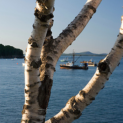 Fishing boats in Frenchman Bay Bar Harbor Maine USA