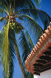 Mexico, Jalisco, Puerta Vallarta. Palm tree adn tile roof.