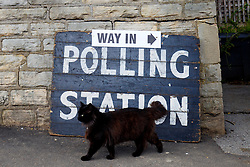 © Licensed to London News Pictures. 07/05/2015. LONDON, UK. A cat wandering outside Broomhall Centre Polling Station in Sheffield Hallam Constituency whilst people voting in the 2015 General Election at on Thursday, 7 May 2015. Photo credit: Tolga Akmen/LNP