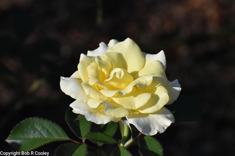 Art Photo, Flower