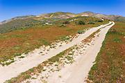 Dirt road in the Temblor Range, Carrizo Plain National Monument, California