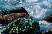Limu (Seaweed), Maui, Hawaii<br />
