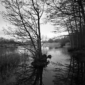 Lake, Wivenhoe, Essex 2012