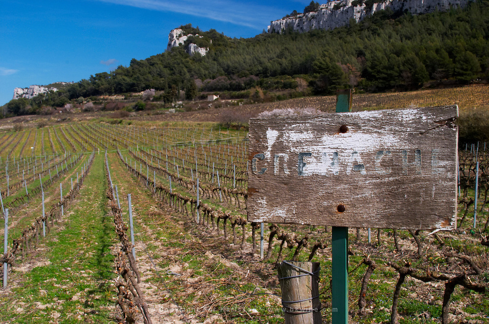 Sun bleached sign saying Grenache in the vineyard Château Barbanau and Clos Val-Bruyere Cassis Cote d'Azur Var France