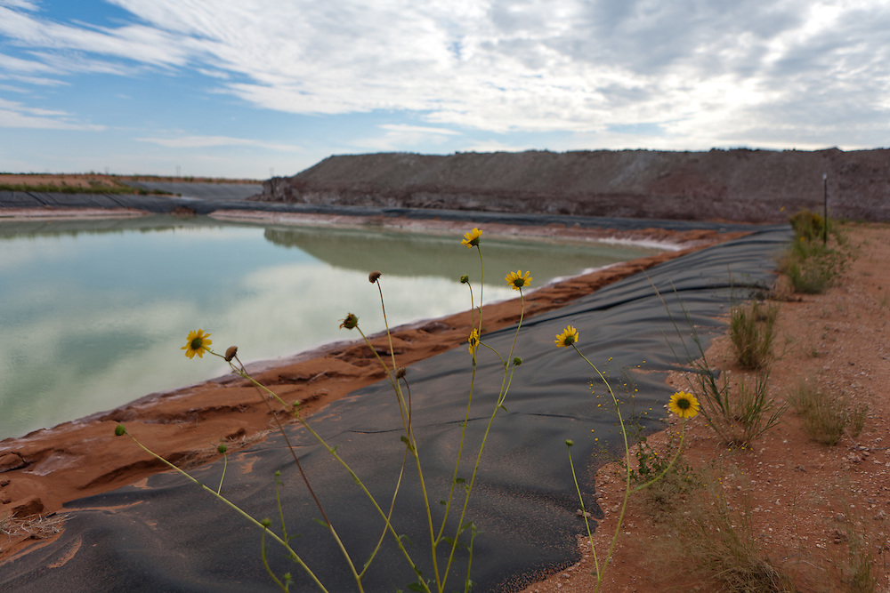 Sunflowers grow alongside a saltwater evaporation pond at The Waste Isolation Pilot Plant in Eddy County. WIPP received $172 million as part of the Recovery and Reinvestment Act. The saltwater pond is used to capture runoff as part of the mining process. A new pond was built adjacent to this using recovery funds.
