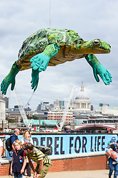 "© Licensed to London News Pictures. 06/09/2020. LONDON, UK.  An activist from Extinction Rebellion (XR)  holding an model sea turtle takes part in a ""Flood Alert"" protest on the shore of the River Thames near Gabriel's Wharf on the South Bank to highlight the effects of climate change on rising sea levels.  Photo credit: Stephen Chung/LNP"