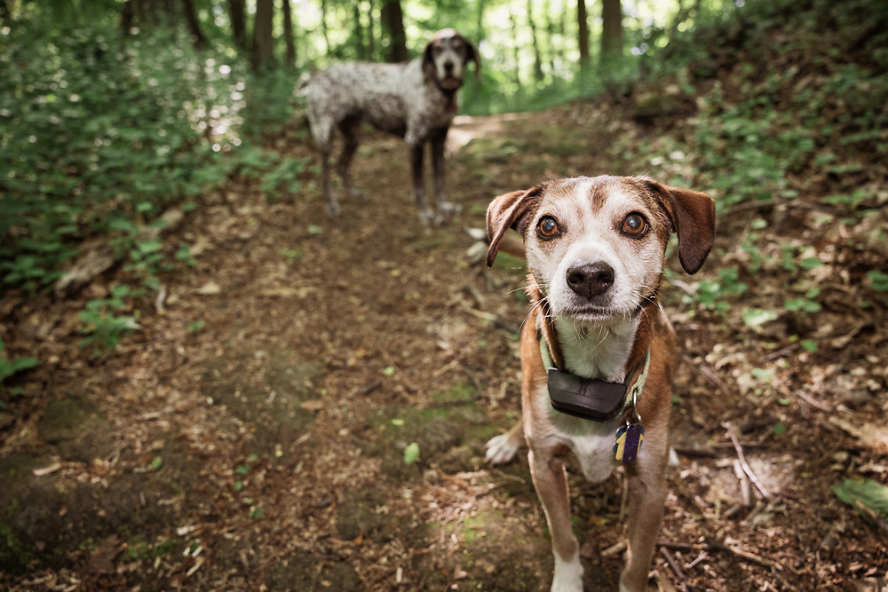 terrier mix on hiking trail in the woods
