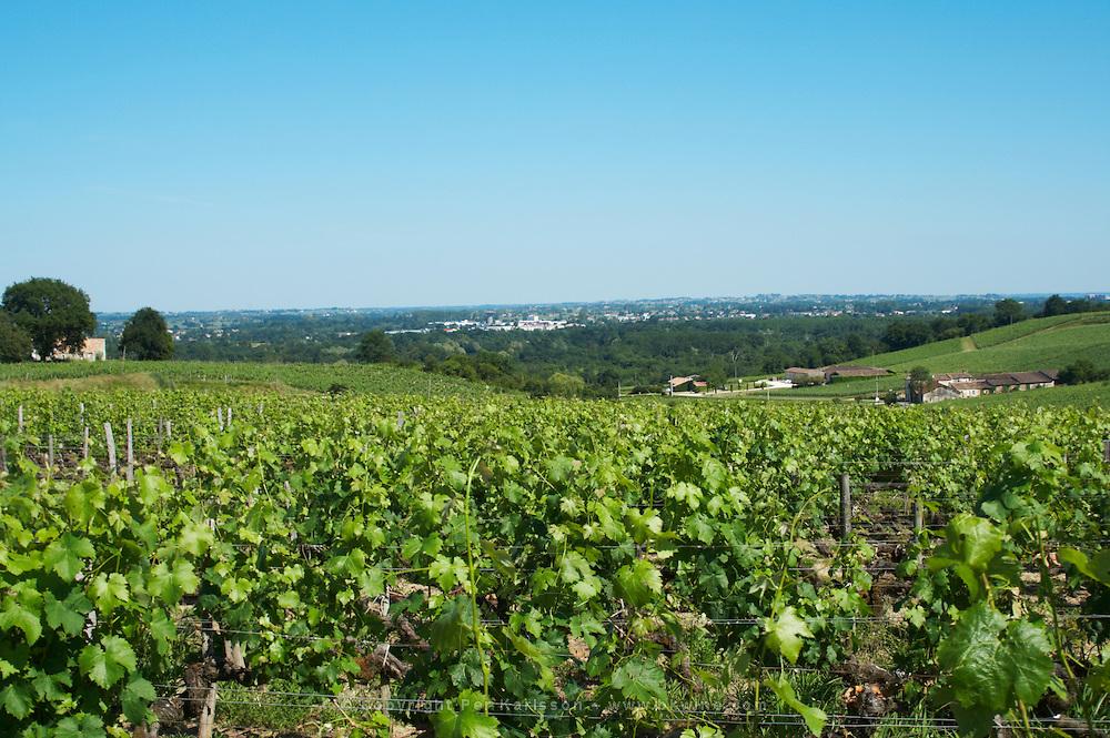 vineyard chateau villars fronsac bordeaux france