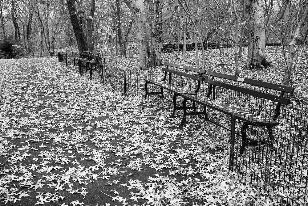 Autumn leaves and benches in the Ramble of Central Park