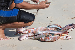 Fisherman cleaning dead fish on sand at beach, Havana, Cuba