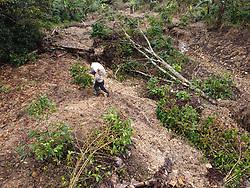 A man carries a sack across a landslide on the coffee farm of a COCASJOL member near Colinas, Santa Bárbara, Honduras.