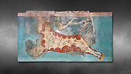 Mycenaean Fresco wall painting of a Mycanaean acrobat leaping over a bull, Early Palace,  Tiryns, Greece.  Athens Archaeological Museum. Grey art Background <br /> <br /> 14th  Cent BC.. Cat No 1595. The Mycenaean Fresco depicts an acrobat leaping over a charging bull whilst holding onto its horns. This ritual symbolised the struggle of domination of man over wild nature. .<br /> <br /> If you prefer to buy from our ALAMY PHOTO LIBRARY  Collection visit : https://www.alamy.com/portfolio/paul-williams-funkystock/mycenaean-art-artefacts.html . Type -   Athens    - into the LOWER SEARCH WITHIN GALLERY box. Refine search by adding background colour, place, museum etc<br /> <br /> Visit our MYCENAEN ART PHOTO COLLECTIONS for more photos to download  as wall art prints https://funkystock.photoshelter.com/gallery-collection/Pictures-Images-of-Ancient-Mycenaean-Art-Artefacts-Archaeology-Sites/C0000xRC5WLQcbhQ