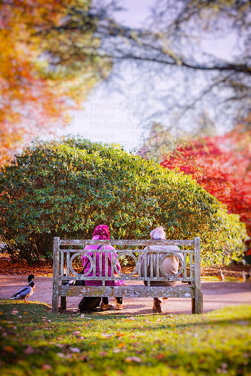 Elderly couple sitting on a bench feeding the ducks in a colourful garden in England, UK