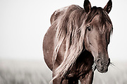 """""""Look deep into nature, and then you will understand everything better""""  ~ Albert Einstein<br /> <br /> Tracie Spence's fine art photography series of The Spanish Wild Mustangs."""
