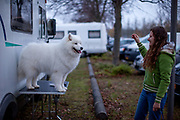 A young woman from Italy at the parking area for the World Dog Show 2017 in Leipzig, Germany. Many participants from abroad do life during the competition in trailers close to the Trade Fair. Over 31,000 dogs from 73 nations will come together from 8-12 November 2017 in Leipzig for the biggest dog show in the world.