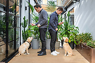 """EMBARGOED IMAGE - AVAILABLE FOR PUBLICATION FROM 00.01 on Thursday 17th October; 2019.<br /> ##Editorial free to use photo##<br /> <br /> Ant and Dec successfully get guide dog puppies Ant and Dec to Sit for Them:<br /> <br /> To mark this year's Guide Dogs Appeal, Pups to Partnerships, Ant and Dec have had two guide dog pups named after them, an adorable Yellow Labrador puppy has been named after Ant while the playful Golden Retriever has been named after Dec. Ant and Dec are supporting this year's Guide Dogs Appeal which follows the progress of a group of seven puppies. Throughout October, the charity is sharing the journey of the puppies as they progress to become life-changing guide dogs.    <br />  <br /> Speaking of the partnership, Ant says: """"We're so proud to be part of the Pups to Partnerships campaign; not only do we get to meet these adorable puppies but we also get to hear about the great work that Guide Dogs does."""" Dec adds: """"These puppies will go on to change lives and give two people living with sight loss the independence and freedom we take for granted; we can't wait to see how these puppies progress."""" <br />  <br /> The Guide Dogs Pups to Partnerships Appeal is taking place from the 1st to the 31st October 2019. For more information on how to get involved, visit: www.guidedogs.org.uk/appeal<br /> <br /> Picture date: Tuesday October 15; 2019.<br /> Photograph by Christopher Ison for Guide Dogs ©<br /> 07544044177<br /> chris@christopherison.com<br /> www.christopherison.com"""