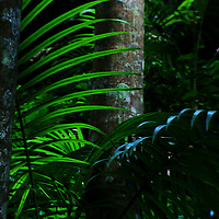 Tree and Fern