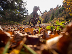 Mountain biker climbing track in the woods towards Ringelbuhlkopf, Alsace, France