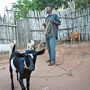 CAPTION: The training that Stanislas has received through the programme has helped him to understand effective animal rearing techniques, including efficient management of care and living conditions. Raising medium-sized animals such as goats has helped him to generate sustained revenue, and their produce continues to fetch a good price at the market. LOCATION: Rushikiri Village, Kimuna Cell, Rusatira Sector, Huye District, South Province, Rwanda. INDIVIDUAL(S) PHOTOGRAPHED: Stanislas Iriboneye.