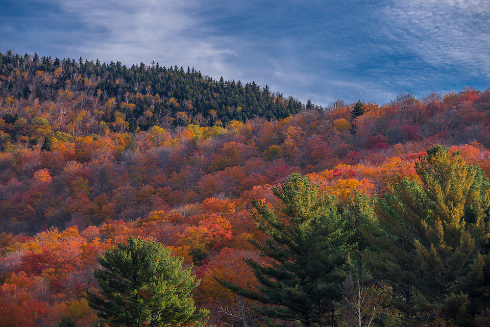Fall foliage along Morgan Peak, Coolidge State Forest, Plymouth, VT