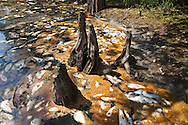 Fish kill in Porter's River, a backwater outlet off the West Pearl River in St. Tammany Parish Louisiana caused by a discharge from the Temple-Inland paper mill in Bogalusa  of  black liquor, a byproduct of the paper making process, turning the river black  killing fish, shellfish and turtles along 40 miles of the river. The chemicals released into the river depleted oxygen levels which caused the fish kill in the river and its' many tributaries. Clean-up crews were dispatched on the Aug. 18th to remove the dead fish ( including  carp, drum catfish, perch, sac-a - lait , eels , sardines and heel splitter clams) before they sink depleting the waterway of more oxygen causing an even larger environmental disaster.