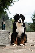 Meraviglioso Winery