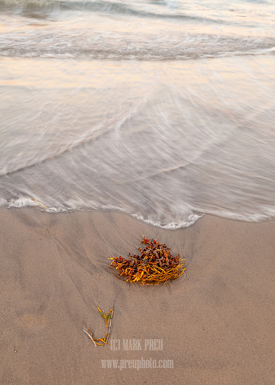 The advance of a wavelet stops just short of a clump of rockweed on Nauset Beach.