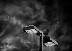 A crow perches on a street light against the night sky