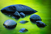 Rocks in the Sol Duc River in Washington state's Olympic National Park, river reflecting the surrounding spring green foliage