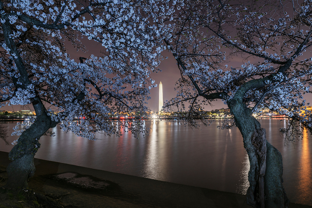Cherry blossoms along Tidal Basin are illuminated with a flash as the Washington Monument looms in the distance in this long exposure taken in Washington, D.C., on Monday, April 01, 2019.