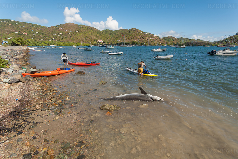 A local fisherman pulls in a shark at Pen Point in Coral Harbor, St. John, USVI. © Robert Zaleski / rzcreative.com<br /> —<br /> To license this image contact: robert@rzcreative.com