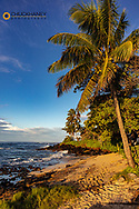 Palm trees over small beach at Kukuiula Bay in Kauai, Hawaii, USA
