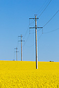 Power line transmission poles in field of flowering canola crop in rural Collingullie, country New South Wales, Australia <br /> <br /> Editions:- Open Edition Print / Stock Image