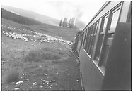 """RGS Barriger Special stopped by sheep on Lizard Head Pass while southbound on Lizard Head Pass.<br /> RGS  Snow, CO  Taken by Barriger, John W. III - 9/9/1935<br /> In book """"Southern, The: A Narrow Gauge Odyssey"""" page 64"""