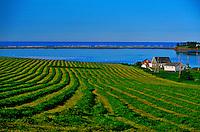 Farm near Cymbria, Prince Edward Island, Canada