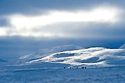Skagafjörður is the center of horse breeding in Iceland.