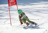 Piche Invitational giant slalom at Gunstock.  U12 men 1st run.  ©2014 Karen Bobotas Photographer