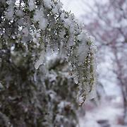 Salomon Hammer Trail Winter Edition på Bornholm.