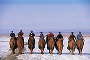 Bactrian camels (Camels bactrians) & nomads<br /> Gobi Desert<br /> Mongolia